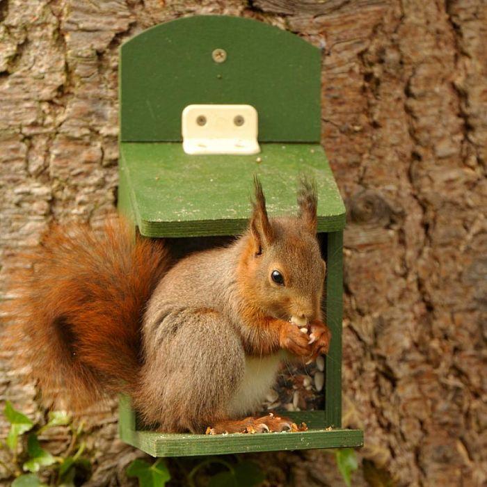 eekhoorn in tuin - eekhoornpakket