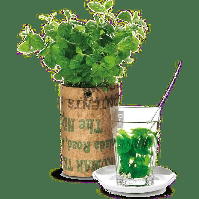 cadeau voor een theeliefhebber - kweekset