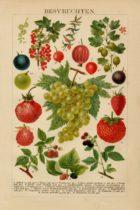 cadeau voor een oudere vrouw - nostalgische afbeelding poster van fruit