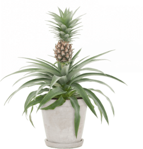 bijzondere plant - cadeau voor een oudere dame