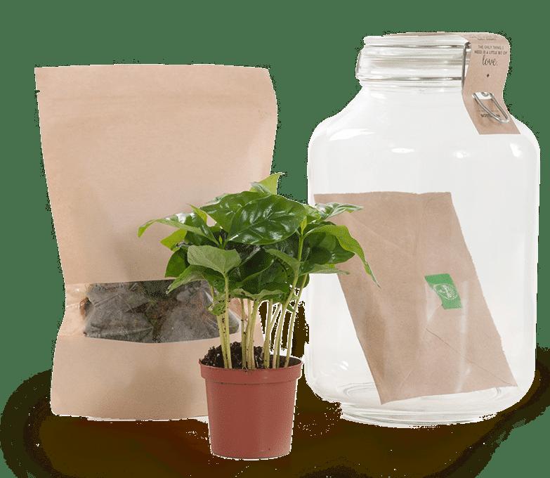 cadeau voor oma 90 jaar - zelfvoorzienende plant