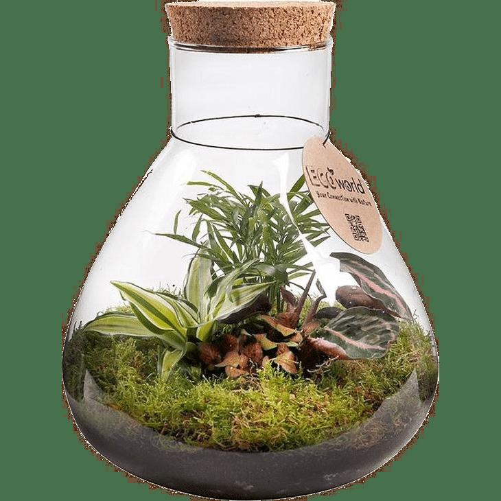 cadeau voor een oudere dame - ecosysteem plant