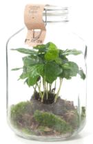 cadeau voor een oudere dame - zelfvoorzienende plant