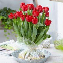 bloemen online bestellen - tulpen met bol