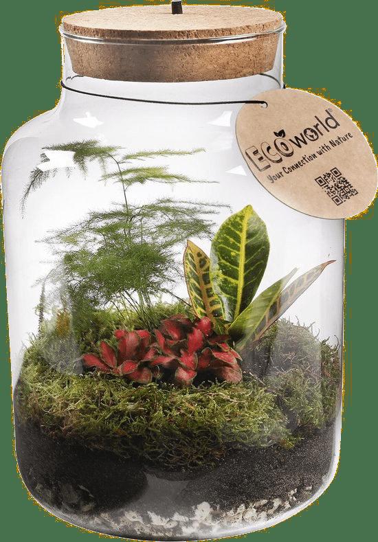 plant in afgesloten vaas - cadeau voor oma 85 jaar